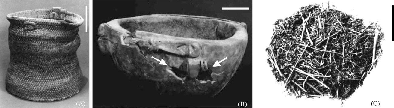 Cesto (sinistra) e scodella di legno (centro) contenenti resti di canapa (destra) in una tomba di Yanghai, Cina, 500 a.C. (da Jiang et al., 2006, fig. 2, p. 415)
