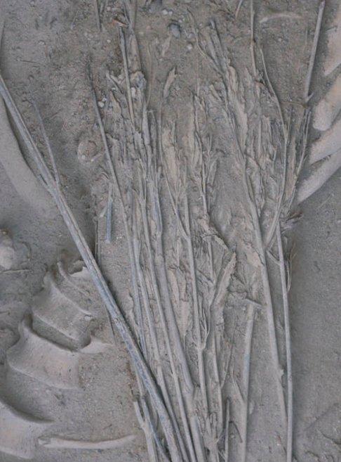 Le piante di canapa che coprivano il corpo della tomba M231 del cimitero di Jiayi, Xinjiang, Cina, 800-400 a.C. (da Jiang et al., 2016, fig. 2b, p. 215)