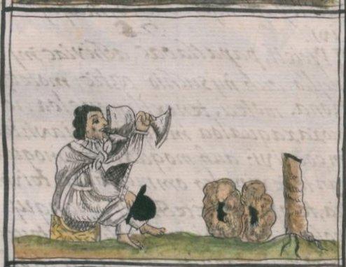 Probabile raffigurazione di peyote (sulla destra della scena) dal Codice Fiorentino, XI, 142v