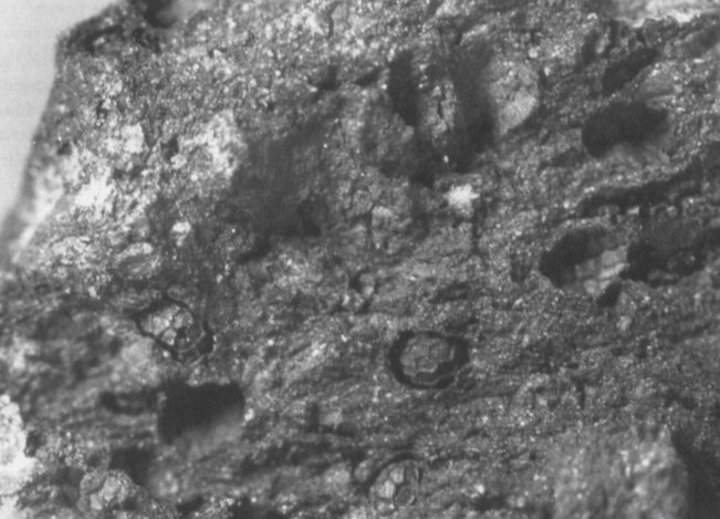 Semi e impronte di semi di papavero in un coccio del sito neolitico di Vaux-et-Borset, Belgio (da Bakels et al., 1992, fig. 4, p. 477)