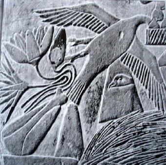 Particolare di un bassorilievo della Tomba di Ptahhotep a Saqqara, circa 2500 a.C., dove sono contemporaneamente raffigurati i fiori di ninfea azzurra e di ninfea bianca (quest'ultima sopra alla prima) (da Jaksch, 2012, fig. 57, p. 44)