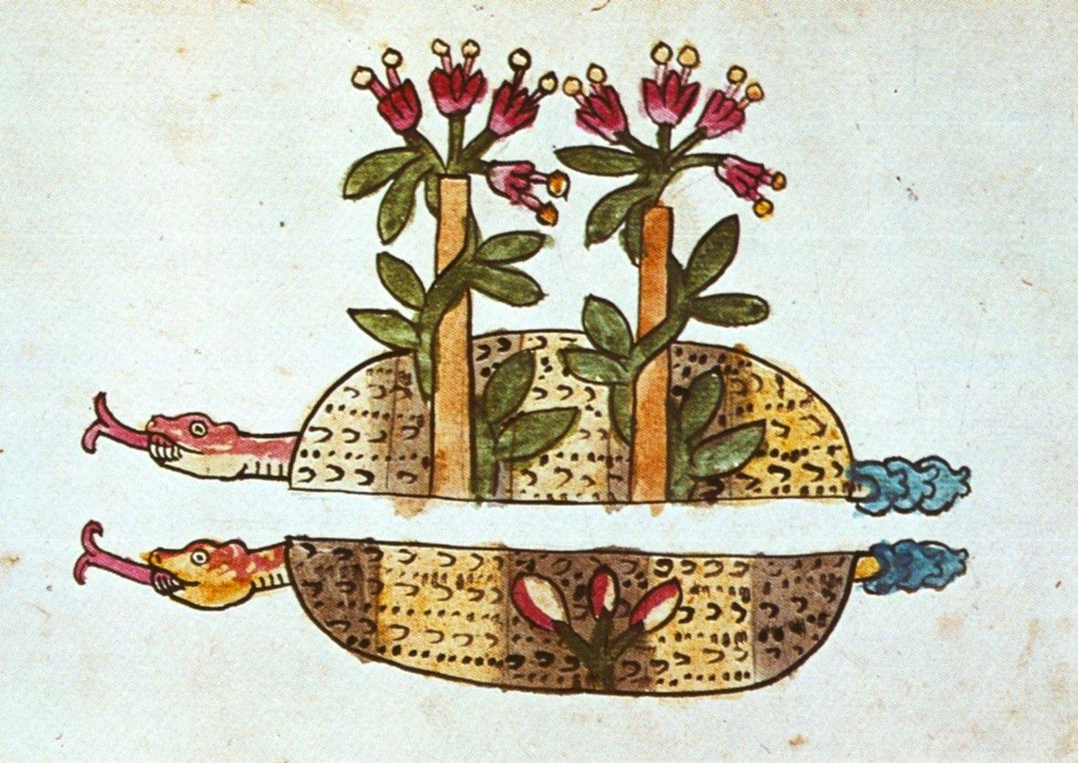 Probabile raffigurazione della pianta dell'ololiuhqui nel Codice Magliabecchi (83r)