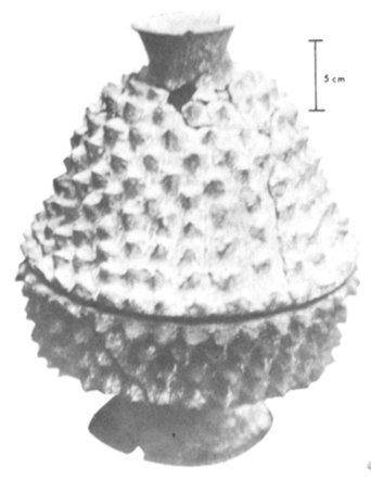 Vassoio in ceramica con coperchio ricoperto di protuberanze spinose da La Cuenca del Blasas, Messico (da Ltzinger, 1979, fig. 2a, p. 151)