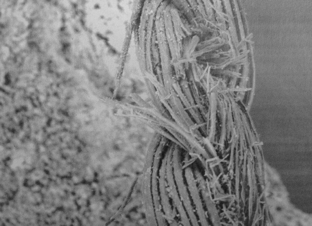immagine al microscopio di frammento di tessuto di canapa in un pugnale di metallo dell'Età del Bronzo rinvenuto nella necropoli di Gricignano d'Aversa (da Artioli et al., 2002, fig. 7, p. 665)