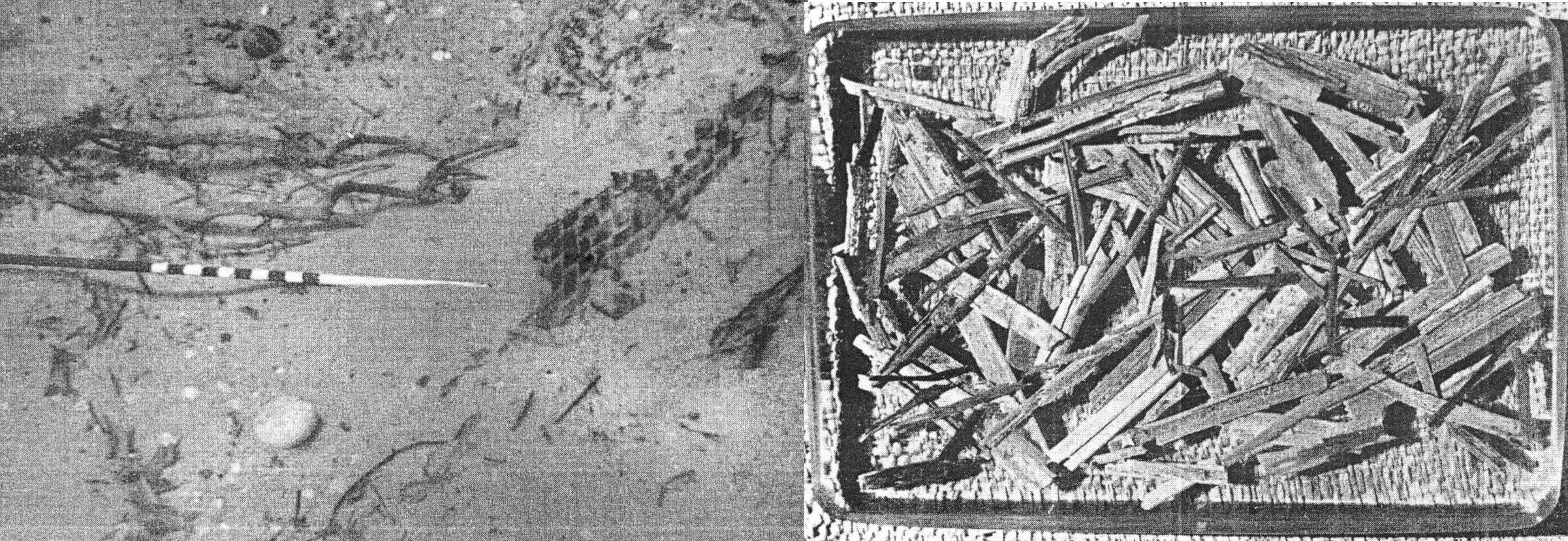 Fusti vegetali affioranti nel fondo marino da una cesta all'altezza della probabile cucina di bordo della nave punica Lilybaeum (sx), raccolti e identificati come resti di canapa (dx) (da Frost et al., 1976, fig. 24b e 26, pp. 63 e 65)